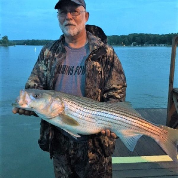 Night Striper